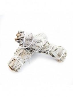 Witte Salie - Extract