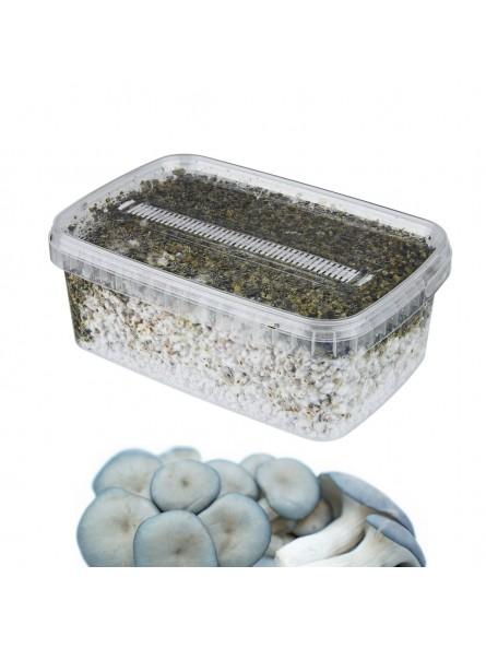 DIY Bleu Oyster Grow Kit